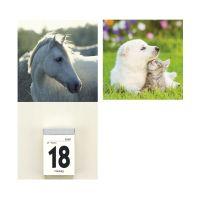 Bild Kalenderrückwand